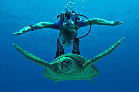 Grenzenloser Spass beim Tauchen im Roten Meer